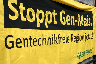Monsanto baut Gen-Mais in der Region Hannover an!