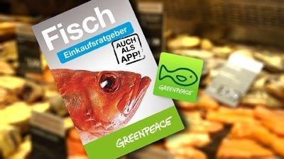 Fisch-Einkaufsratgeber