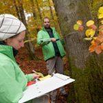 Greenpeace-Aktivisten fordern Einschlagstopp für Bäume über 140 Jahren
