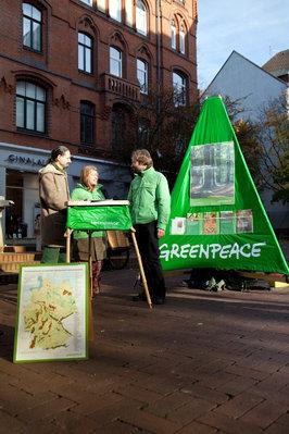 Greenpeace sucht Paten für Baumriesen im Spessart