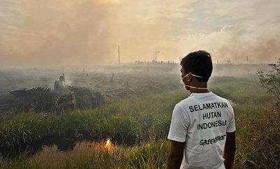 Raubbau für Palmöl