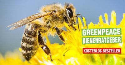 Bienen-Ratgeber