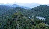 Wald und Berge
