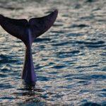 Die Meeresschutzkampagne läuft weiter