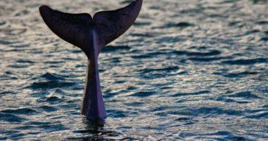 30×30 – Die Meeresschutzkampagne läuft weiter